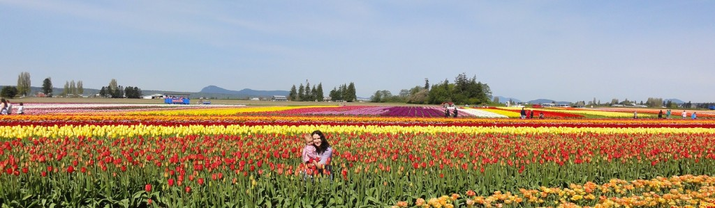 Tulip Town tulip field